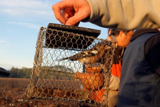 Violence entre chasseurs et LPO: prison avec sursis requise pour