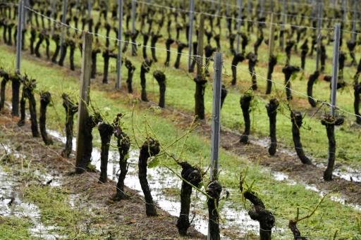 Orages dans l'Ouest: pas de victimes, gros dégâts dans les  vignes