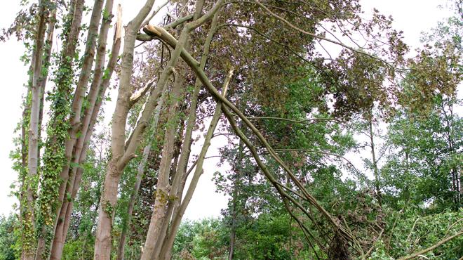 La chute d'une branche tue une fillette — Orages en Mayenne