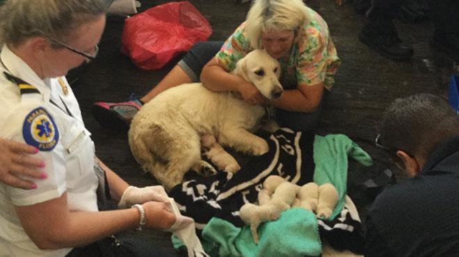 Huit chiots naissent à l'aéroport de Tampa — Floride