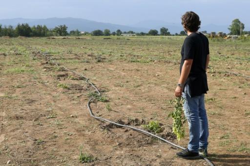 1.400 clémentiniers saccagés en Corse: un agriculteur reçoit un large soutien