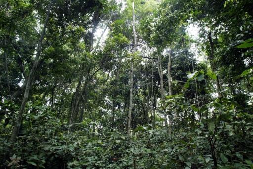 RDC: confessions religieuses au chevet de la forêt du bassin du Congo