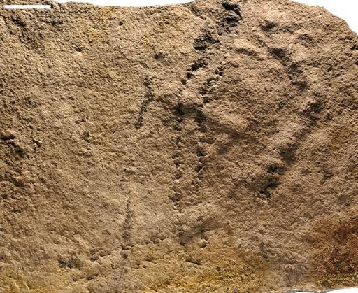 Des empreintes d'animaux vieilles de 541 millions d'années découvertes en Chine