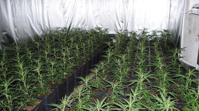 300 plants de cannabis découverts lors d'un incendie à Anderlues
