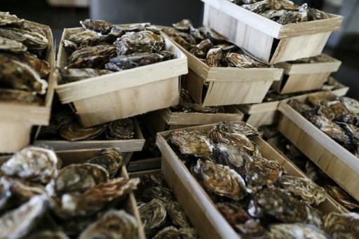 Bassin d'Arcachon: les huîtres de nouveau consommables, pas les moules