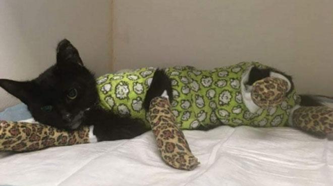 Terrible acte de cruauté en Flandre: ce petit chat a été mis au four à 200 degrés pendant 15 minutes