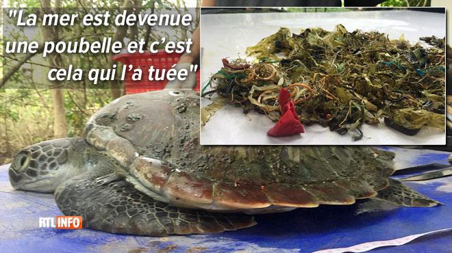 Voici ce que les vétérinaires ont sorti de cette tortue verte, une espèce protégée: l'animal n'a pas survécu