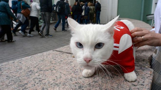 Mondial 2018: Achille le Chat a délivré son premier pronostic