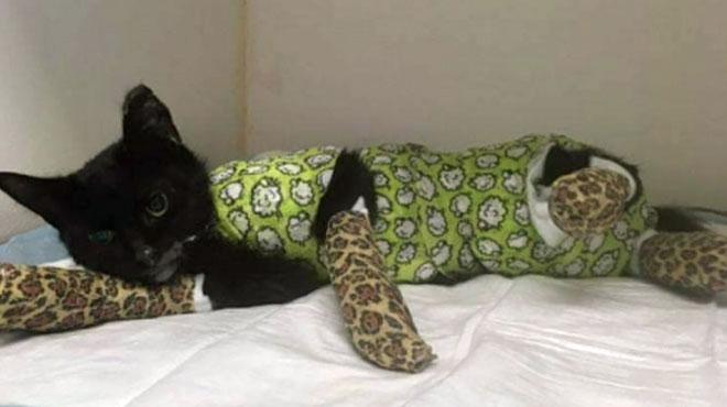 Les soigneurs de Sprotje, le chat mis au four et maltraité à Courtrai, donnent des nouvelles et expliquent où ira l'argent récolté