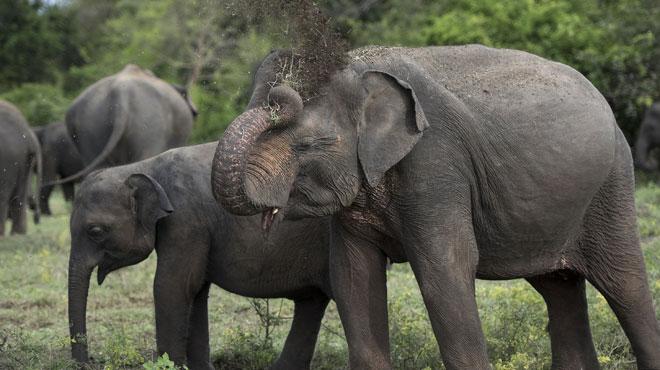 Un éléphant tue un homme au Népal