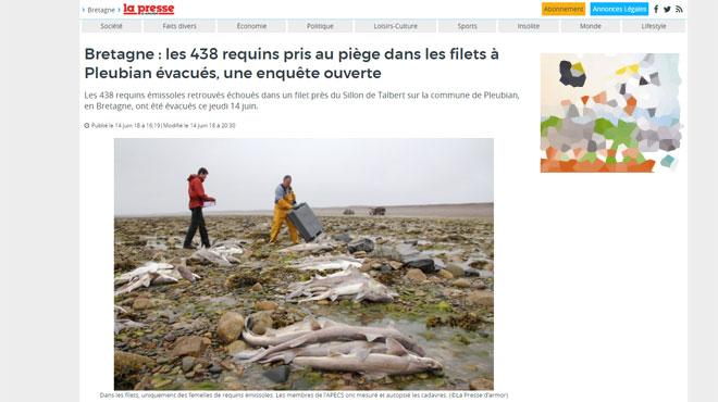 France: au moins 450 requins retrouvés morts piégés dans un filet sur les côtes bretonnes