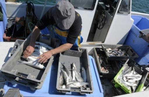 Sur les bateaux français, poisson recherche pêcheur désespérément