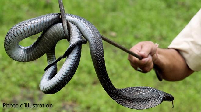 Une femme avalée par un python géant — Indonésie