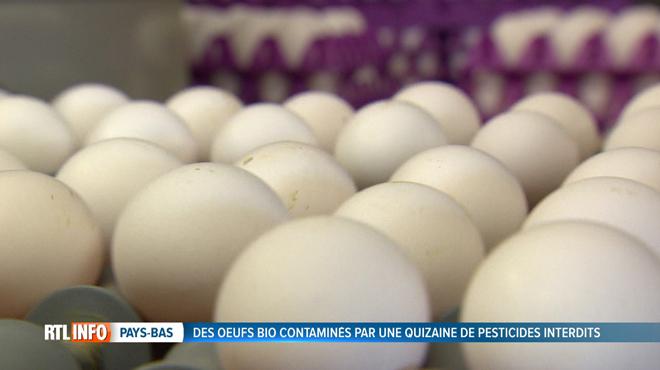 Des traces de pesticides et de désinfectants retrouvés dans des œufs bio aux Pays-Bas: