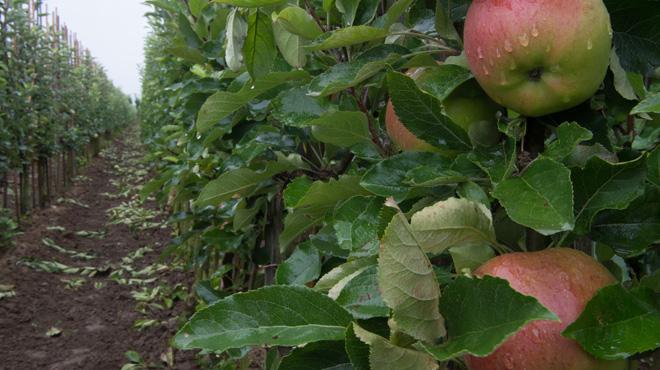 Le gel du mois d'avril 2017 reconnu comme calamité agricole: les producteurs wallons vont recevoir plus de 5 millions d'euros