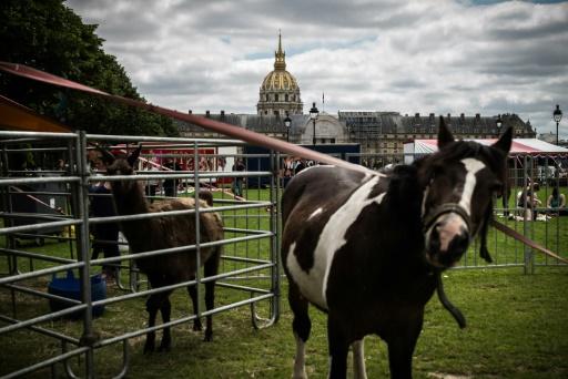 Des cirques et leurs animaux aux Invalides à Paris contre leur