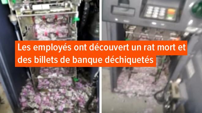 Inde: des rats s'insinuent dans un distributeur de billets de banque et grignotent 1,2 millions de roupies