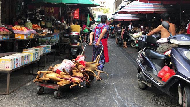 Le ragoût au toutou mitonne lors d'un festival chinois où des milliers sont sacrifiés... malgré l'année du Chien
