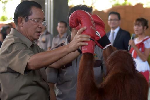 Cambodge: en campagne électorale, une pause pour un spectacle d'orangs-outans