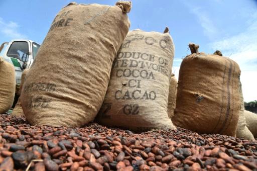 Côte d'Ivoire: une centrale électrique avec les déchets du cacao