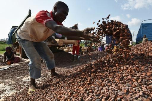 La Côte d'Ivoire investira près d'un milliard d'euros pour réhabiliter sa forêt
