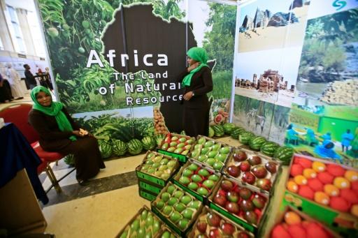 Afrique subsaharienne: forte croissance de la production agricole attendue d'ici 2027