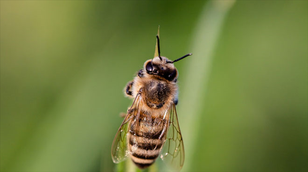 hoverfly-3454075_1920