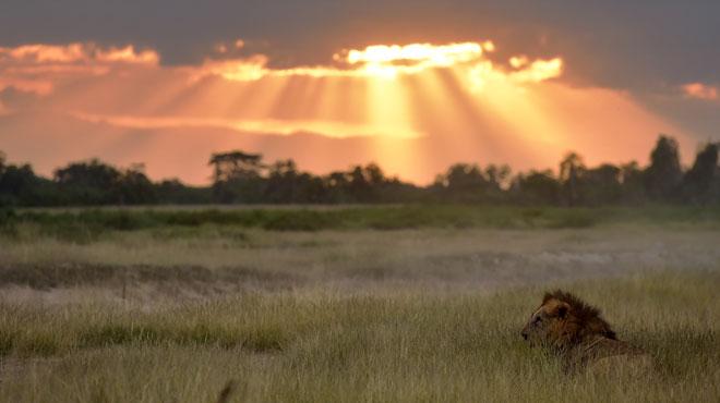 Afrique du Sud: des braconniers dévorés par des lions