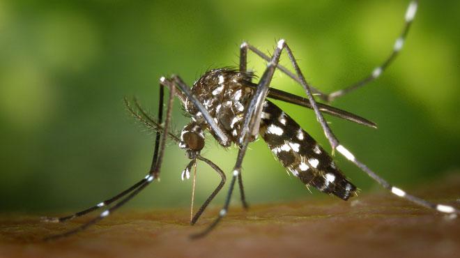 Invasion de moustiques: une commune flamande déclenche le plan d'urgence