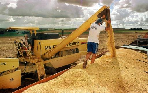 Brésil: le soja conquiert les savanes du Cerrado