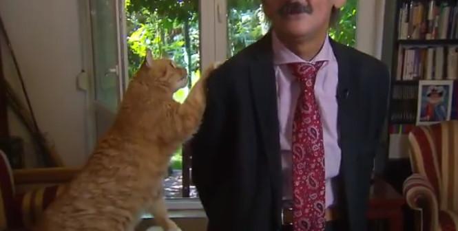 Ce chat vole la vedette à son maître en pleine interview en direct (vidéo)