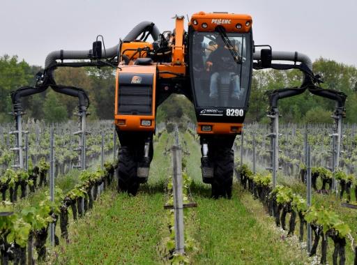 Gironde: la main d'oeuvre saisonnière se fait rare dans les châteaux viticoles
