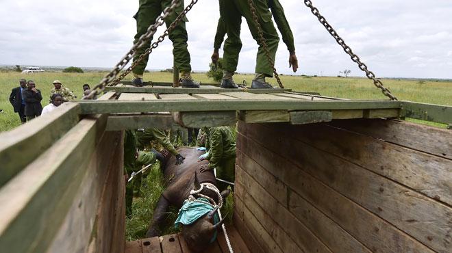 Au Kenya, encore un rhinocéros mort après avoir été déplacé: il n'en reste que 5.000 dans le monde
