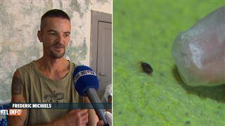 Les punaises de lit envahissent la Belgique- pour Frédéric, c'est invivable 3