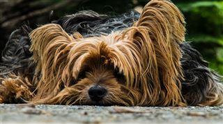 France- elle déménage et laisse son chien mourir dans l'appartement 5