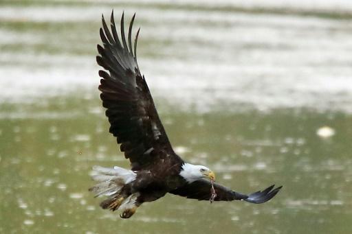 L'administration Trump s'attaque à la loi protégeant les espèces menacées