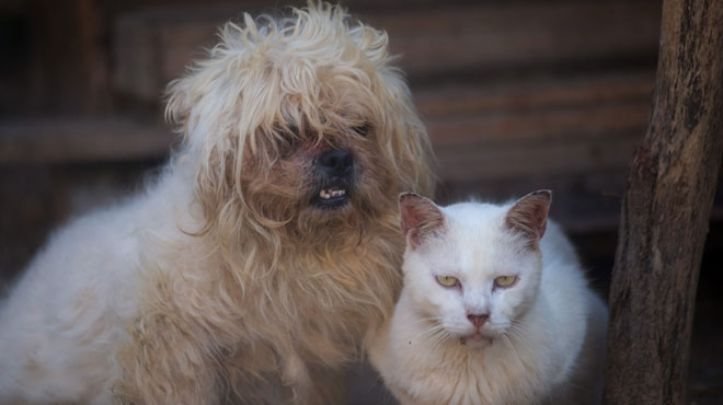 Le gouvernement wallon adopte définitivement le Code du bien-être animal: que risque une personne qui maltraite les animaux?
