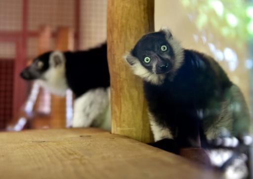 Naissances en série au zoo d'Amnéville