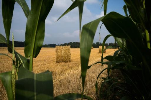 France: la production de blé 2018 attendue en recul à 35 millions de tonnes