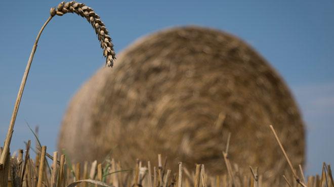 La Wallonie va perdre 450 millions d'aides agricoles
