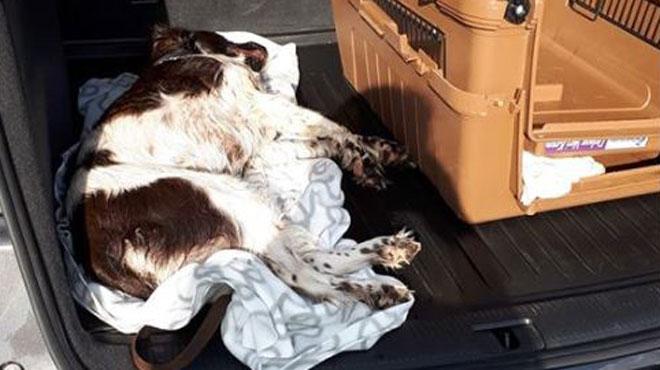 Un chien meurt après avoir été enfermé dans un coffre de voiture au soleil sans la moindre aération à Ninove