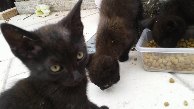 Delphine sauve 4 chatons abandonnés à Ath (photos):