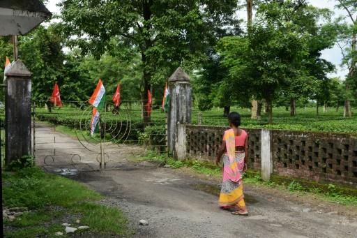 Inde: les ouvriers du thé en grève pour gagner 50 cents de plus par jour