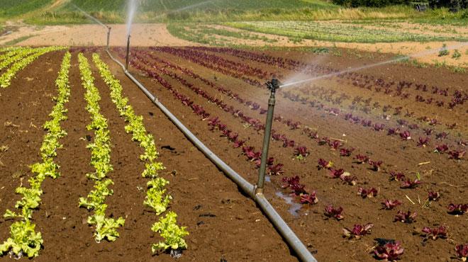 La sécheresse impacte les rendements des agriculteurs: faut-il s'attendre à une hausse des prix?