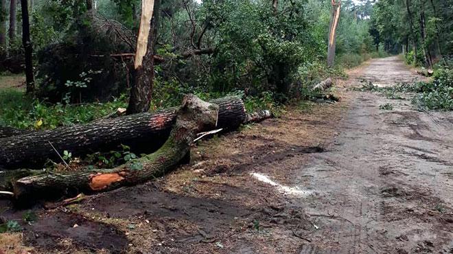 Orages: voici l'endroit le plus touché du pays, où 200 arbres ont été déracinés dans un seul parc!