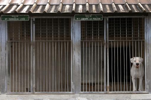 Une association en appelle au gouvernement pour mieux évaluer les animaux abandonnés