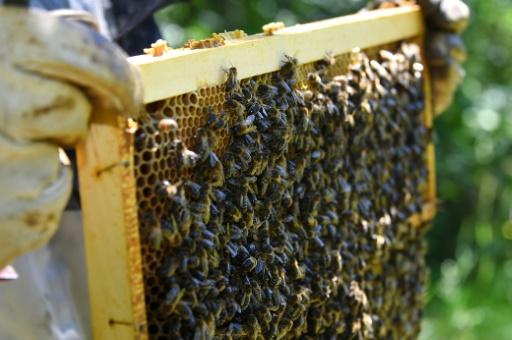Arnaud Montebourg lance une marque de miel