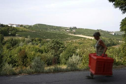 L'Italie, premier producteur européen de vin, débute ses vendanges