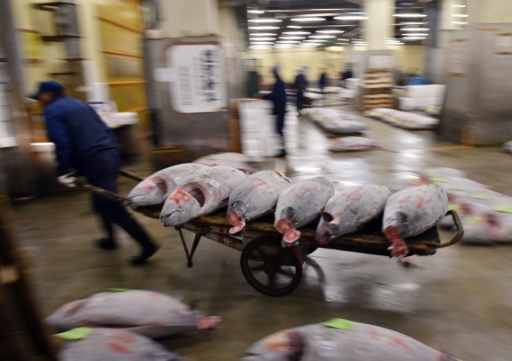 Marché de Tsukiji: garder le thon frais par fortes chaleurs, une gageure