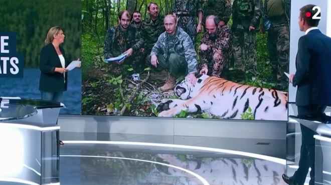 Poutine, chasseur de tigres ?